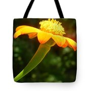 Zinnia Angustifolia Stem Tote Bag