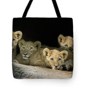 Four Cubs Tote Bag