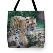 Chicago Zoo Tiger Tote Bag