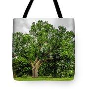 Centennial Oak, Salem Oak Tree Tote Bag by Louis Dallara