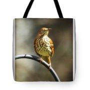 Georgia State Bird - Brown Thrasher Tote Bag