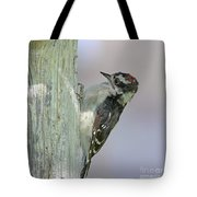 Hairy Woodpecker Tote Bag