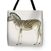 Mountain Zebra  Dauw  Illustrated By Charles Dessalines D' Orbigny  1806-1876  Tote Bag