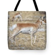 Pronghorn Tote Bag by Bitter Buffalo Photography