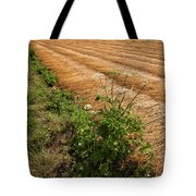 Field With Brown Cut Flax In Rows Drying In The Sun Tote Bag