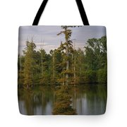 Tennesse Cypress In Wetland  Tote Bag
