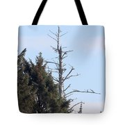 Ruby Beach Sunshine Tote Bag