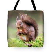 Red Squirrel Sciurus Vulgaris Tote Bag