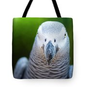 African Grey Parrot Tote Bag by Rob D Imagery