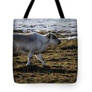 Svalbard Reindeer Tote Bag