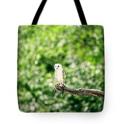 Beautiful Barn Owl Tote Bag by Rob D Imagery