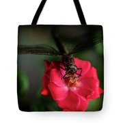 Dragonfly On A Flower Of A Red Rose. Macro Photo Tote Bag