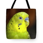 Portrait Of Budgie Birds Tote Bag