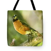 Robin With Two Berries Tote Bag by Michael D Miller