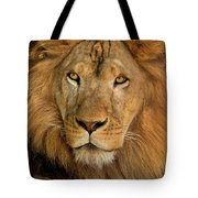 656250006 African Lion Panthera Leo Wildlife Rescue Tote Bag by Dave Welling