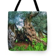Old Olive Tree Tote Bag