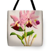 Orchid Vintage Print On Colored Paperboard Tote Bag