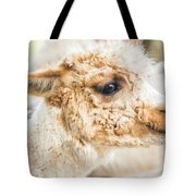 Alpaca In A Field. Tote Bag by Rob D Imagery
