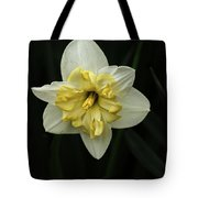 A Beautiful Narcissus Tote Bag