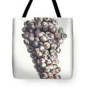 A Bunch Of Grapes By Johan Teyler  1648-1709  Tote Bag