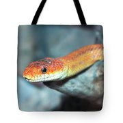 A Close Up Of A Ground Snake Tote Bag