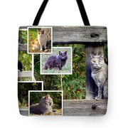A Variety Of Cats Tote Bag