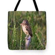 Adult Burrowing Owl Tote Bag