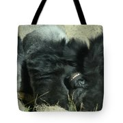 Adult Silverback Gorilla Laying Down With Anguished Expression Tote Bag