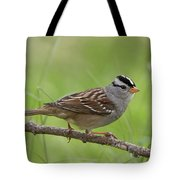 adult White-crowned Sparrow Tote Bag