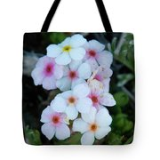 Alpine Rockjasmine Up Close Tote Bag