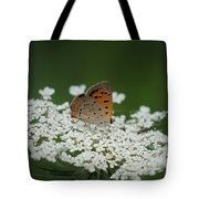 American Copper On Queen Anne's Lace Tote Bag