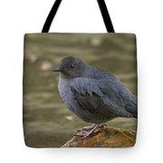 American Dipper, Sierra County California Tote Bag