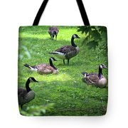 An Afternoon With Canada Geese Tote Bag