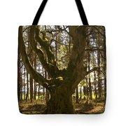ancient tree in forest near Greenlawin Scottish Borders Tote Bag