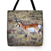 Antelope Buck Tote Bag