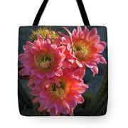 Argentine Giant Pink Trio Tote Bag