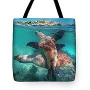 Australian Sea Lion Pair, Coral Coast Tote Bag