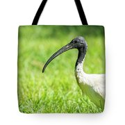 Australian White Ibis Tote Bag by Rob D Imagery
