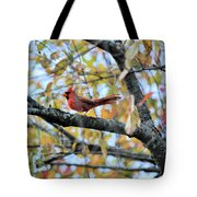 Autumn Cardinal Tote Bag