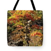Autumn Color In Smoky Mountains National Park Tote Bag