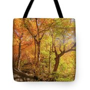 Autumn Morning On Smugglers Notch Tote Bag by Dan Sproul