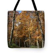 Autumn Pathway Tote Bag by Dylan Punke