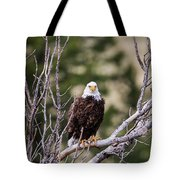B13 Tote Bag by Joshua Able's Wildlife