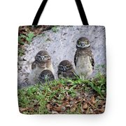 Baby Burrowing Owls Posing Tote Bag