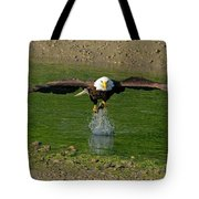 Bald Eagle Catching A Fish Tote Bag