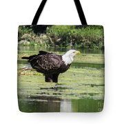 Bald Eagle's Look Tote Bag