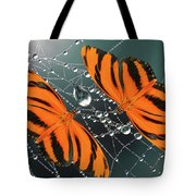 Banded Orange Butterfly. Tote Bag