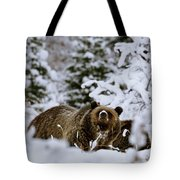 Bear In The Snow Tote Bag