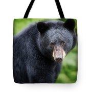 Bear Stare Tote Bag