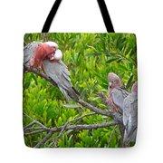 Beautiful Galah Birds With Babies. Wilsons Promontory National Park, Australia Tote Bag